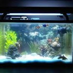 What to Consider When Looking for a Fish Tank