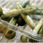 How to Store Shrooms, Keep it Fresh, and Potent