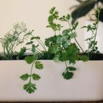 Top Dos and Don'ts of Growing Herbs Indoors